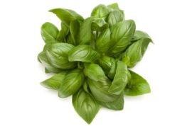 Organic Basil 400x264