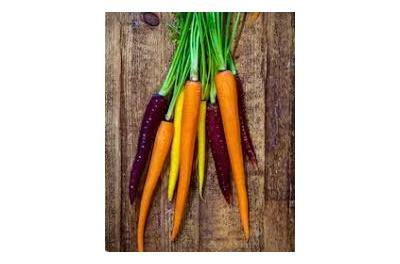 Organic colourful carrots